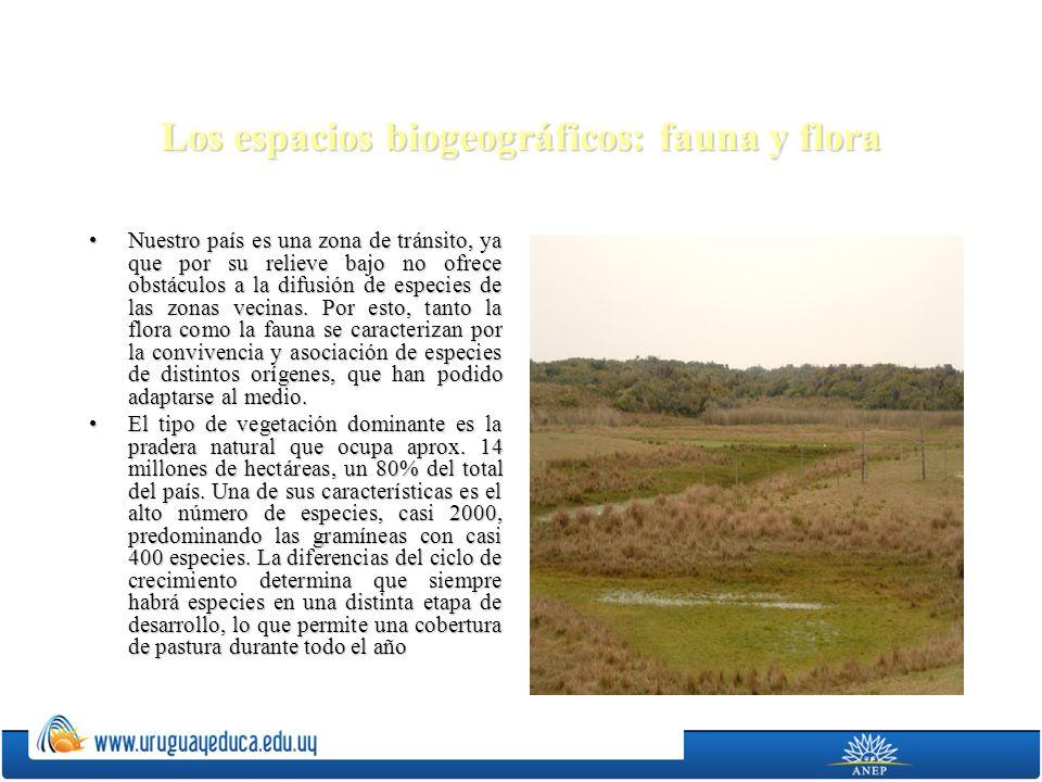 Los espacios biogeográficos: fauna y flora Nuestro país es una zona de tránsito, ya que por su relieve bajo no ofrece obstáculos a la difusión de espe