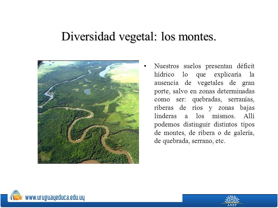 Diversidad vegetal: los montes. Nuestros suelos presentan déficit hídrico lo que explicaría la ausencia de vegetales de gran porte, salvo en zonas det