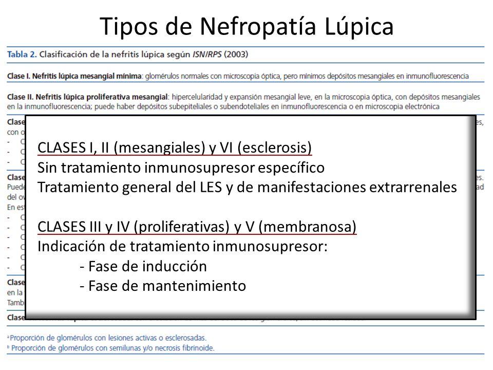 Tipos de Nefropatía Lúpica CLASES I, II (mesangiales) y VI (esclerosis) Sin tratamiento inmunosupresor específico Tratamiento general del LES y de man