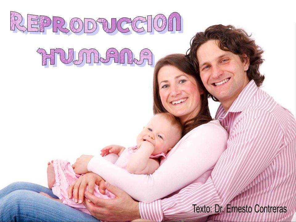 Los espermatozoides solo sobreviven unos 3 días, por lo que para engendrar un hijo, aparte de ser fértiles, se necesita que el varón deposite en la vagina oportunamente (no más de dos días antes de la ovulación), una cantidad suficiente de semen fecundo, que contenga no menos de 100 millones de espermatozoides íntegros y con movilidad adecuada.