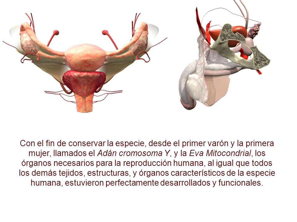 El humano, al igual que la mayoría de las especies conocidas de plantas y animales (más de 2 millones), es bisexual (con individuos de dos sexos: masc