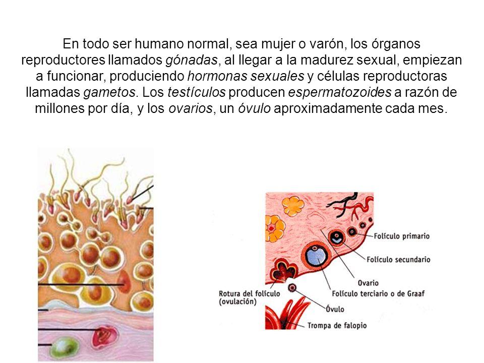 También, toda la información genética necesaria para que los descendientes humanos, pudieran formar y desarrollar hasta su plena madurez, los órganos