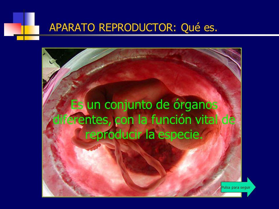APARATO REPRODUCTOR: Qué es. Es un conjunto de órganos diferentes, con la función vital de reproducir la especie. Pulsa para seguir