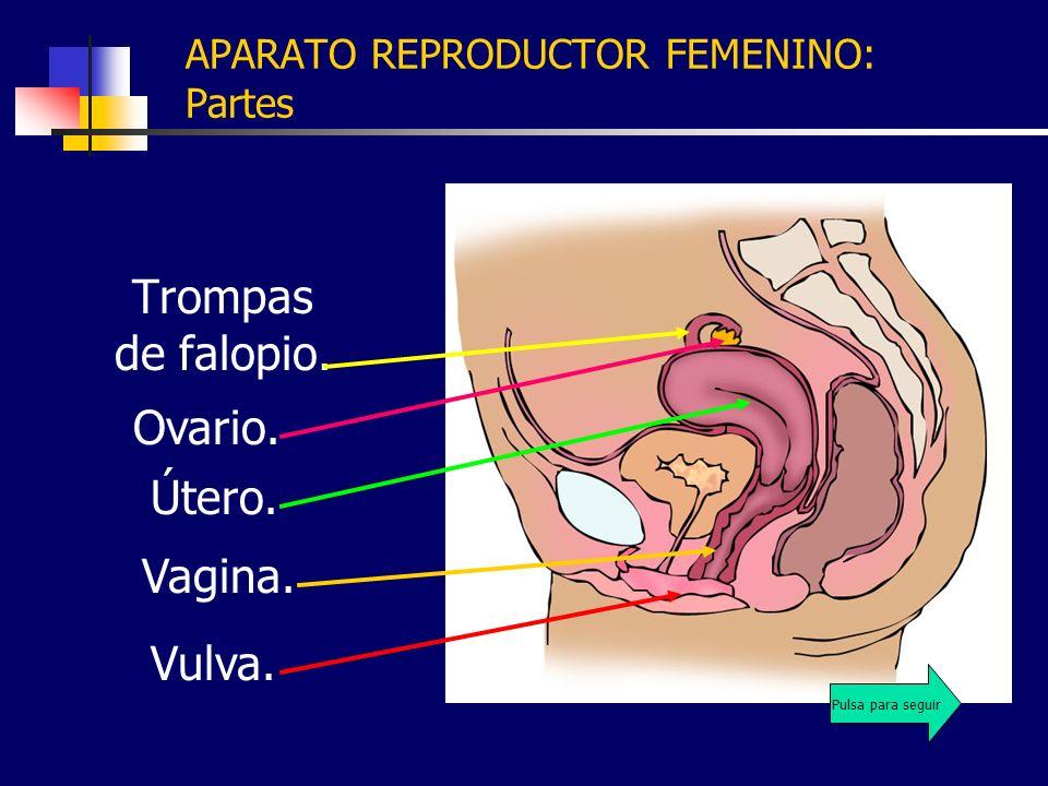 APARATO REPRODUCTOR FEMENINO: Partes Trompas de falopio. Vulva. Vagina. Útero. Ovario. Pulsa para seguir