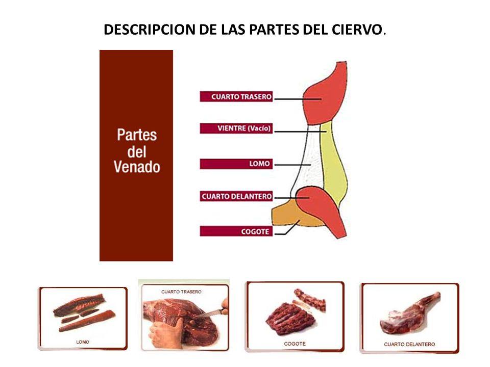 DESCRIPCION DE LAS PARTES DEL CIERVO.