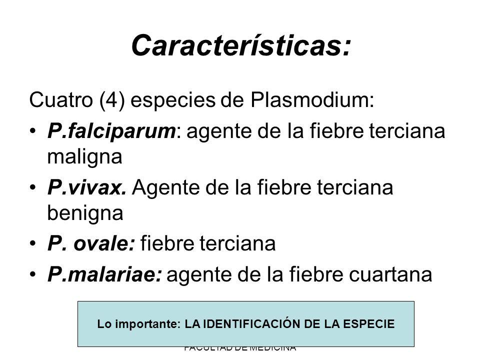 FUNDACION BARCELO FACULTAD DE MEDICINA Filariasis: Nematodos sanguíneos transmitidos por vectores.