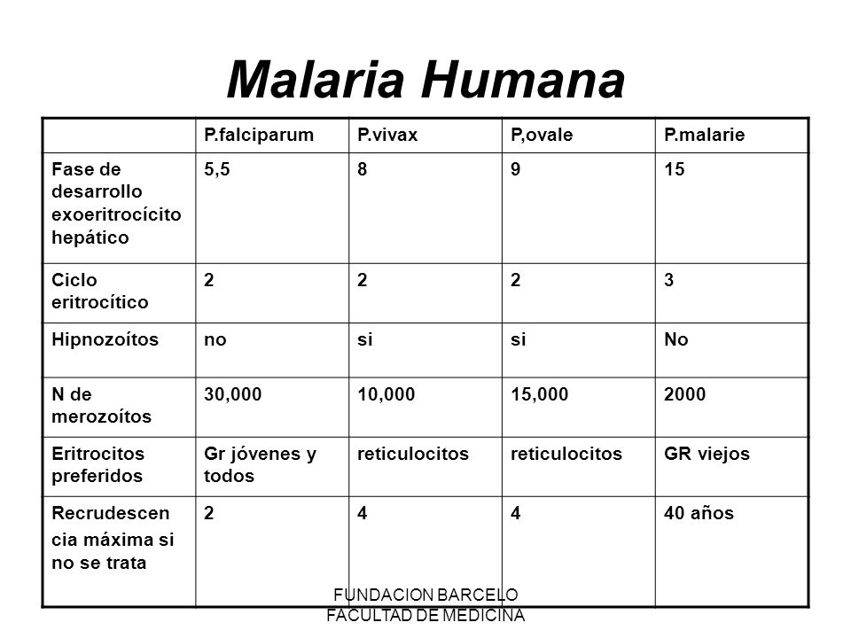 Malaria Humana P.falciparumP.vivaxP,ovaleP.malarie Fase de desarrollo exoeritrocícito hepático 5,58915 Ciclo eritrocítico 2223 Hipnozoítosnosi No N de merozoítos 30,00010,00015,0002000 Eritrocitos preferidos Gr jóvenes y todos reticulocitos GR viejos Recrudescen cia máxima si no se trata 24440 años