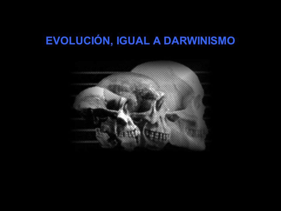 MÁXIMO SANDÍN Bioantropólogo y profesor del Departamento de Biología en la Universidad Autónoma de Madrid, a cargo de la docencia de Evolución Humana
