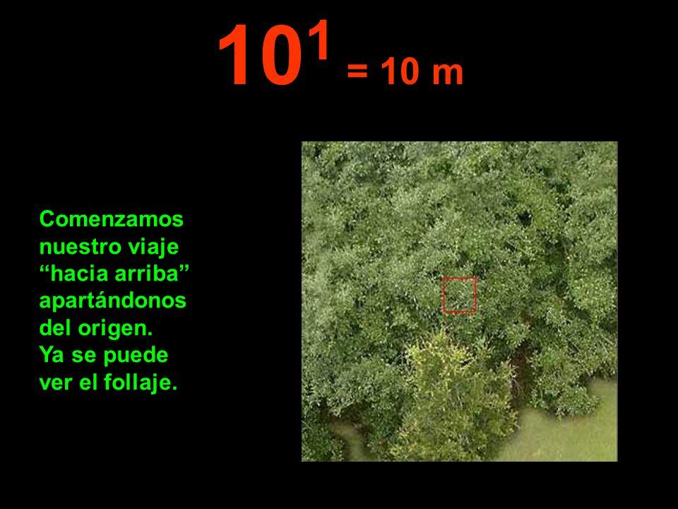 Comenzamos nuestro viaje hacia arriba apartándonos del origen. Ya se puede ver el follaje. 10 1 = 10 m