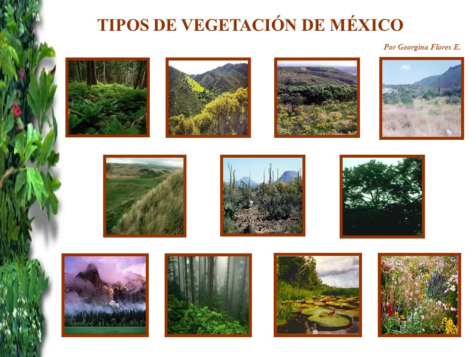 TIPOS DE VEGETACIÓN DE MÉXICO Por Georgina Flores E.