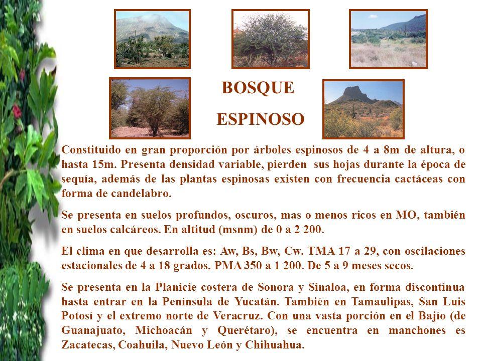BOSQUE ESPINOSO Constituido en gran proporción por árboles espinosos de 4 a 8m de altura, o hasta 15m. Presenta densidad variable, pierden sus hojas d