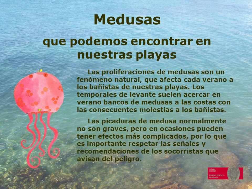 Medusas que podemos encontrar en nuestras playas Las proliferaciones de medusas son un fenómeno natural, que afecta cada verano a los bañistas de nues