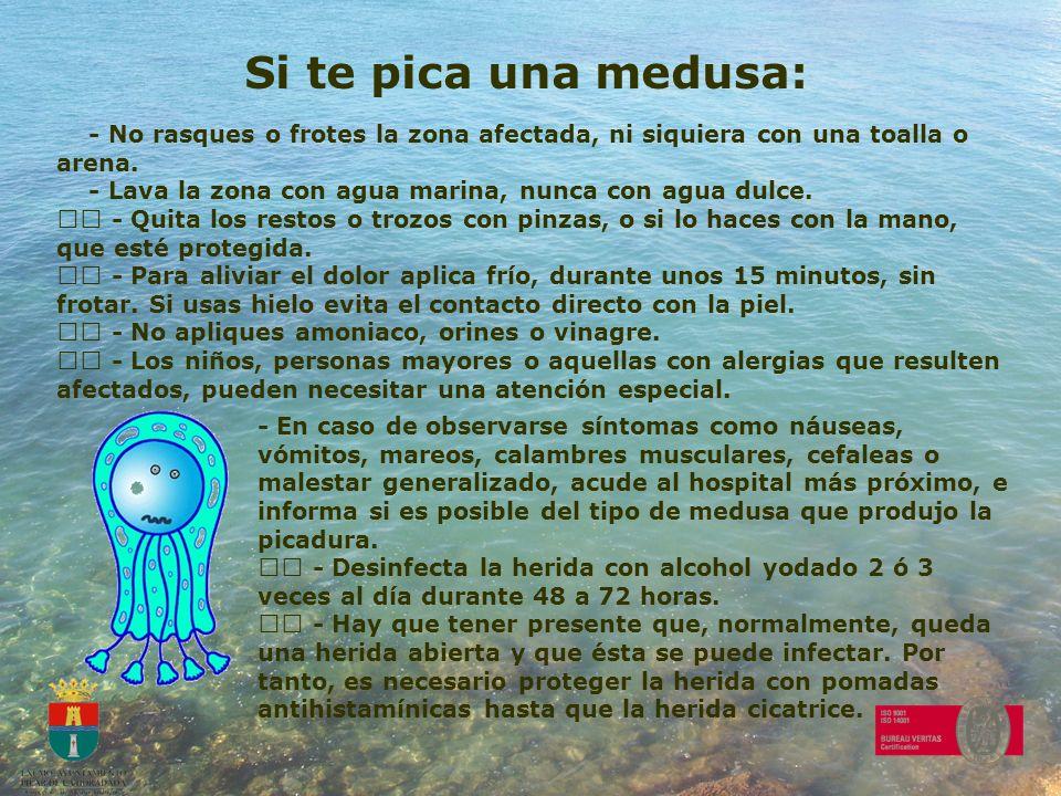 Si te pica una medusa: - No rasques o frotes la zona afectada, ni siquiera con una toalla o arena. - Lava la zona con agua marina, nunca con agua dulc