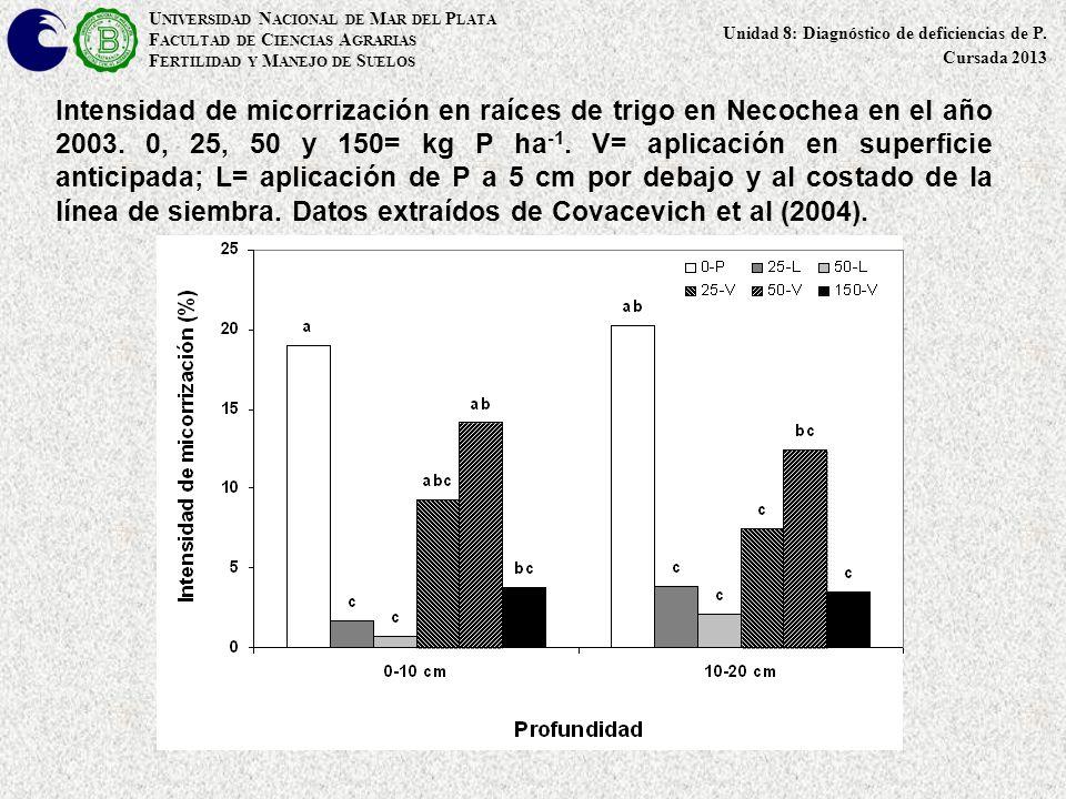 Intensidad de micorrización en raíces de trigo en Necochea en el año 2003. 0, 25, 50 y 150= kg P ha -1. V= aplicación en superficie anticipada; L= apl