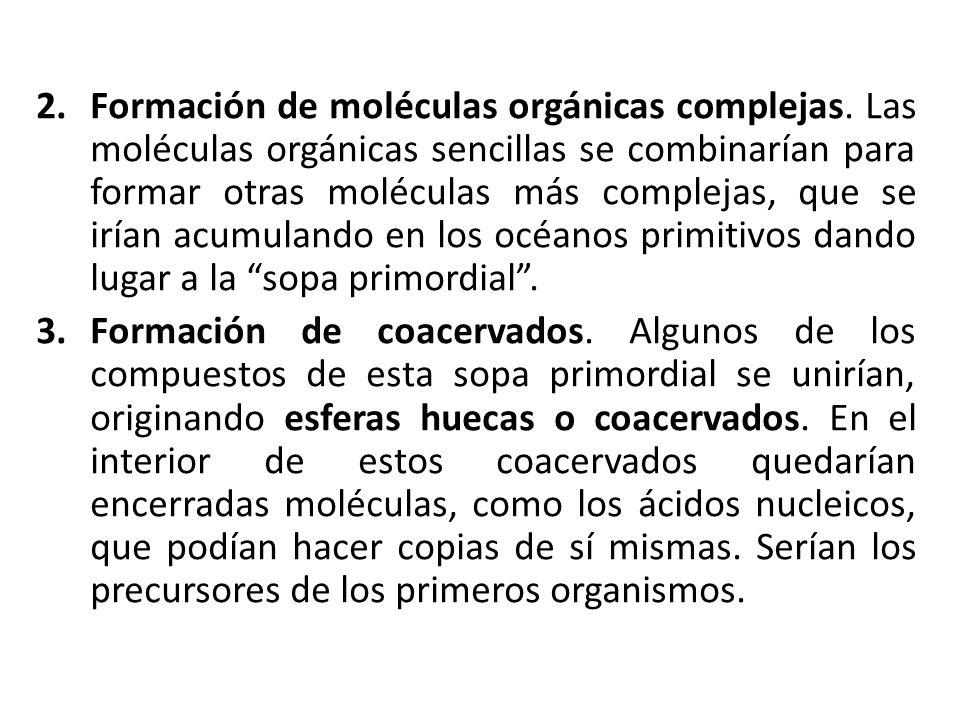 2.Formación de moléculas orgánicas complejas. Las moléculas orgánicas sencillas se combinarían para formar otras moléculas más complejas, que se irían