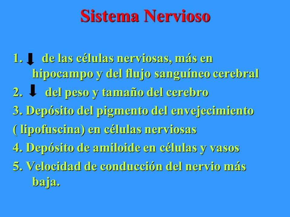 Sistema Nervioso 1. de las células nerviosas, más en hipocampo y del flujo sanguíneo cerebral 2. del peso y tamaño del cerebro 3. Depósito del pigment