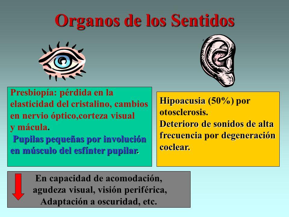 Organos de los Sentidos Presbiopía: pérdida en la elasticidad del cristalino, cambios en nervio óptico,corteza visual y mácula. Pupilas pequeñas por i