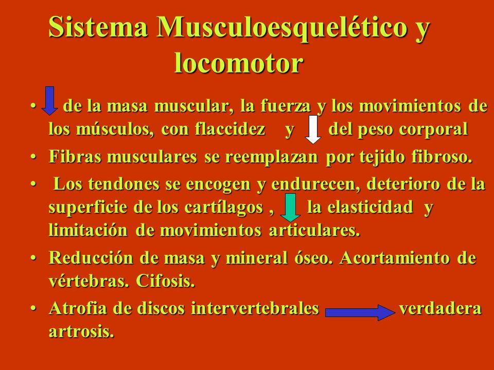 Sistema Musculoesquelético y locomotor de la masa muscular, la fuerza y los movimientos de los músculos, con flaccidez y del peso corporal de la masa