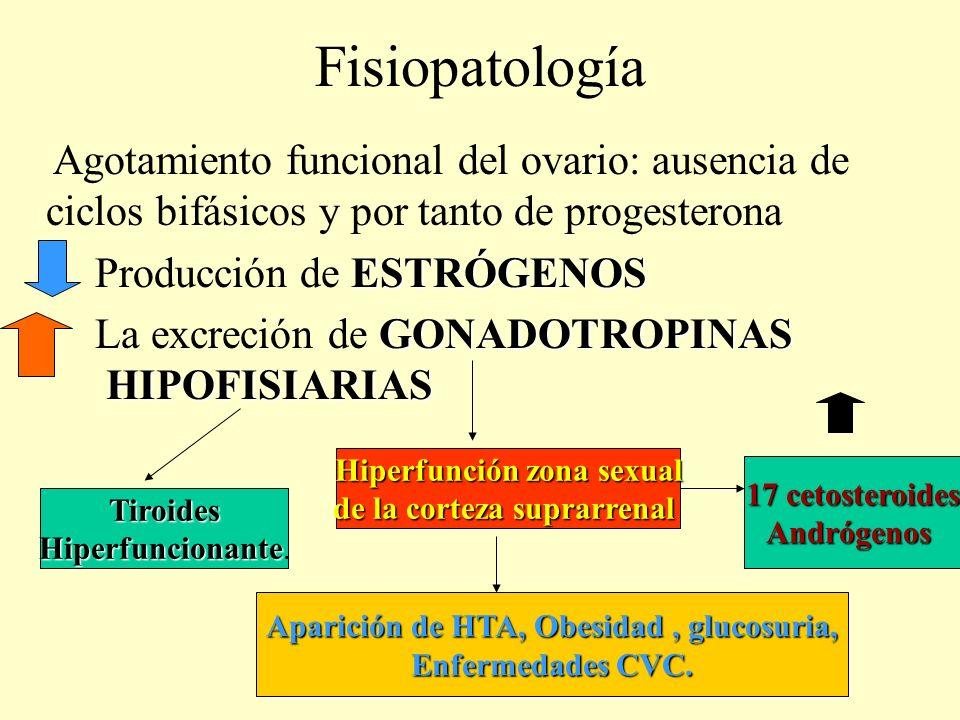 Fisiopatología Agotamiento funcional del ovario: ausencia de ciclos bifásicos y por tanto de progesterona ESTRÓGENOS Producción de ESTRÓGENOS GONADOTR