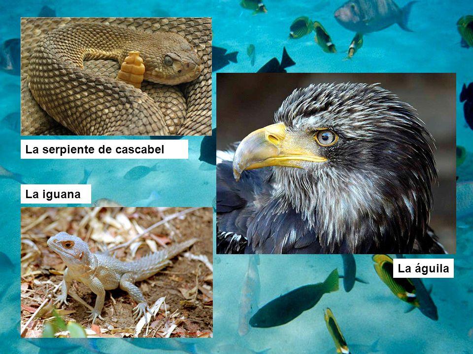 La águila La serpiente de cascabel La iguana