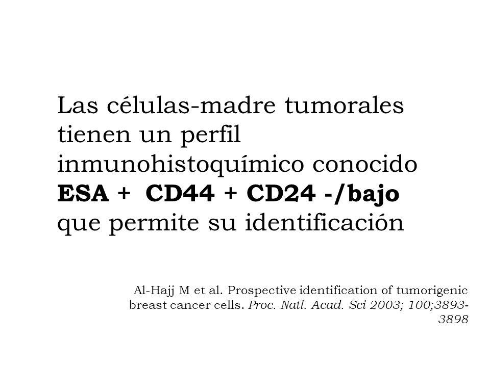 Las células-madre tumorales tienen un perfil inmunohistoquímico conocido ESA + CD44 + CD24 -/bajo que permite su identificación Al-Hajj M et al. Prosp
