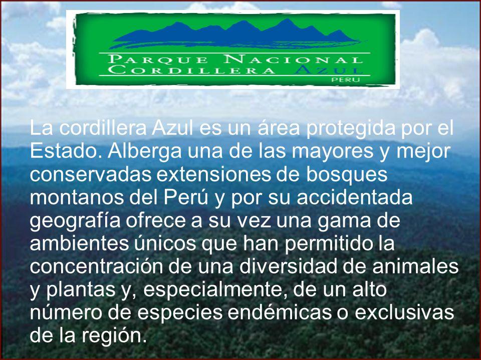 La cordillera Azul es un área protegida por el Estado. Alberga una de las mayores y mejor conservadas extensiones de bosques montanos del Perú y por s