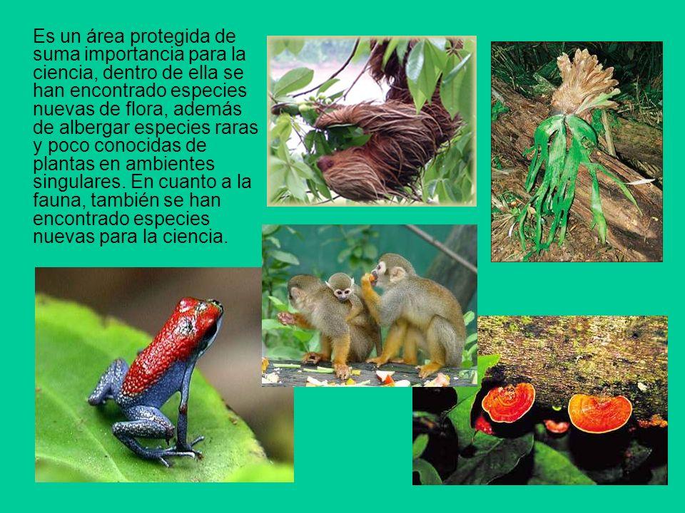 Es un área protegida de suma importancia para la ciencia, dentro de ella se han encontrado especies nuevas de flora, además de albergar especies raras