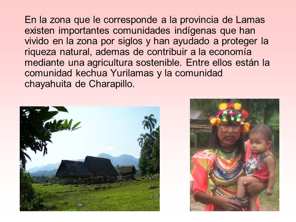En la zona que le corresponde a la provincia de Lamas existen importantes comunidades indígenas que han vivido en la zona por siglos y han ayudado a p