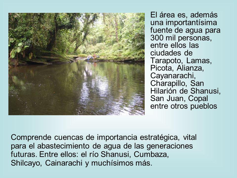 El área es, además una importantísima fuente de agua para 300 mil personas, entre ellos las ciudades de Tarapoto, Lamas, Picota, Alianza, Cayanarachi,