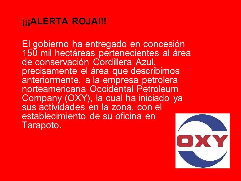 ¡¡¡ALERTA ROJA!!! El gobierno ha entregado en concesión 150 mil hectáreas pertenecientes al área de conservación Cordillera Azul, precisamente el área