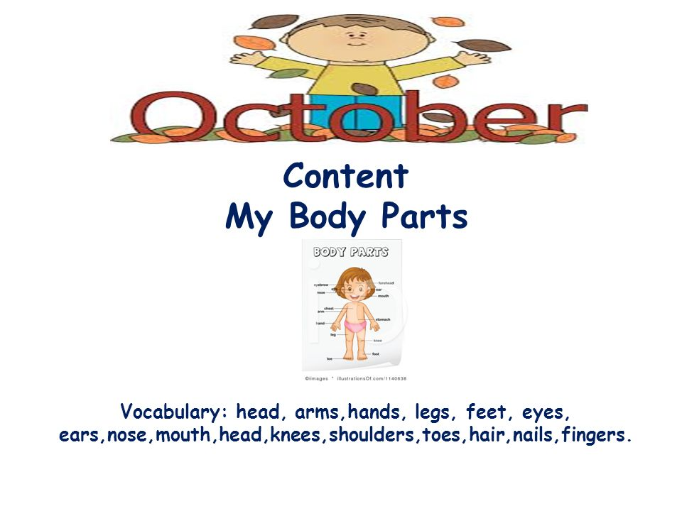 Body parts feet nose Ear arm Eyes fingernails mouth knee Hands legs shoulder head hair