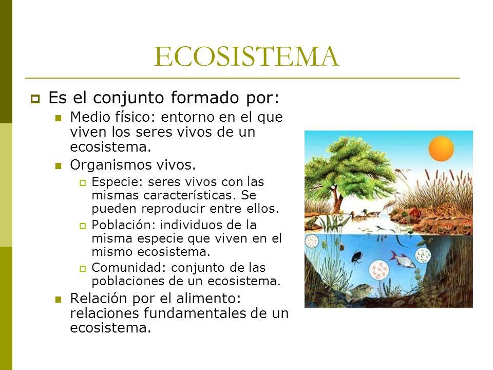 ECOSISTEMA Es el conjunto formado por: Medio físico: entorno en el que viven los seres vivos de un ecosistema. Organismos vivos. Especie: seres vivos
