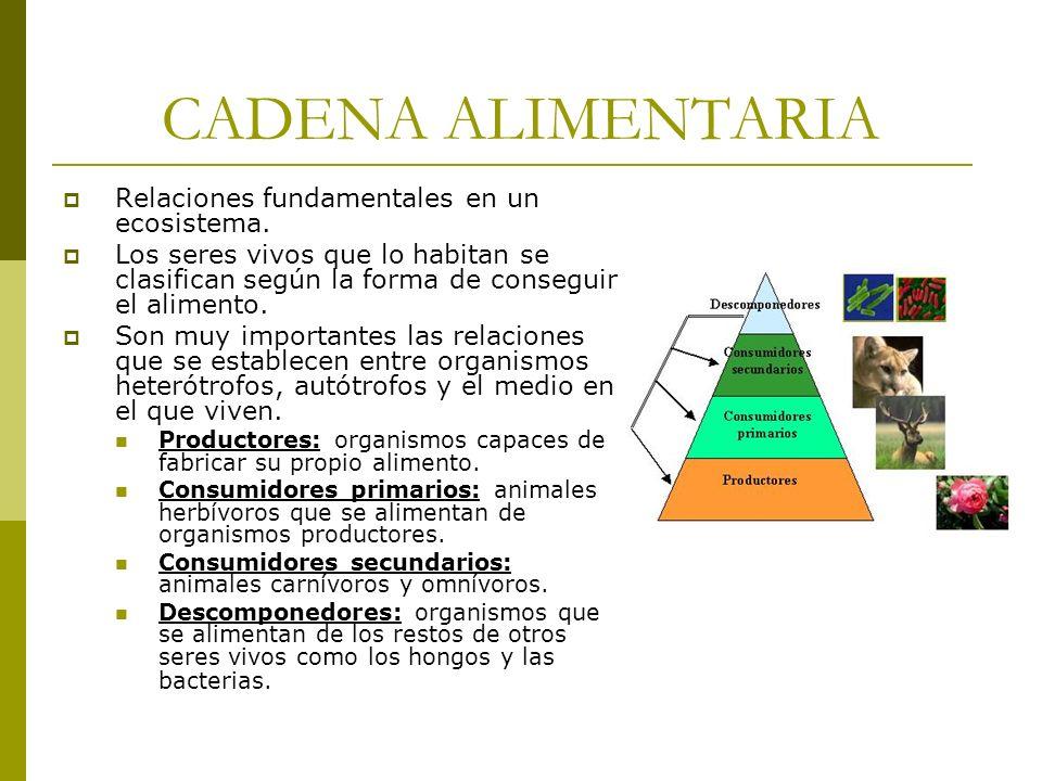 CADENA ALIMENTARIA Relaciones fundamentales en un ecosistema. Los seres vivos que lo habitan se clasifican según la forma de conseguir el alimento. So