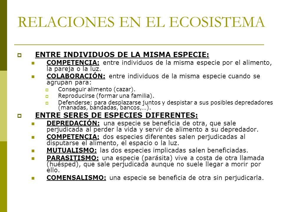 RELACIONES EN EL ECOSISTEMA ENTRE INDIVIDUOS DE LA MISMA ESPECIE: COMPETENCIA: entre individuos de la misma especie por el alimento, la pareja o la lu
