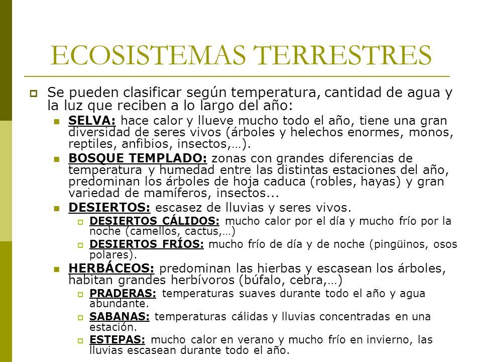 ECOSISTEMAS TERRESTRES Se pueden clasificar según temperatura, cantidad de agua y la luz que reciben a lo largo del año: SELVA: hace calor y llueve mu