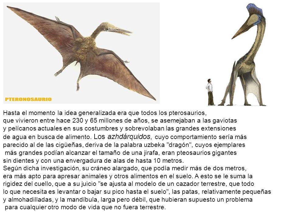 Hasta el momento la idea generalizada era que todos los pterosaurios, que vivieron entre hace 230 y 65 millones de años, se asemejaban a las gaviotas