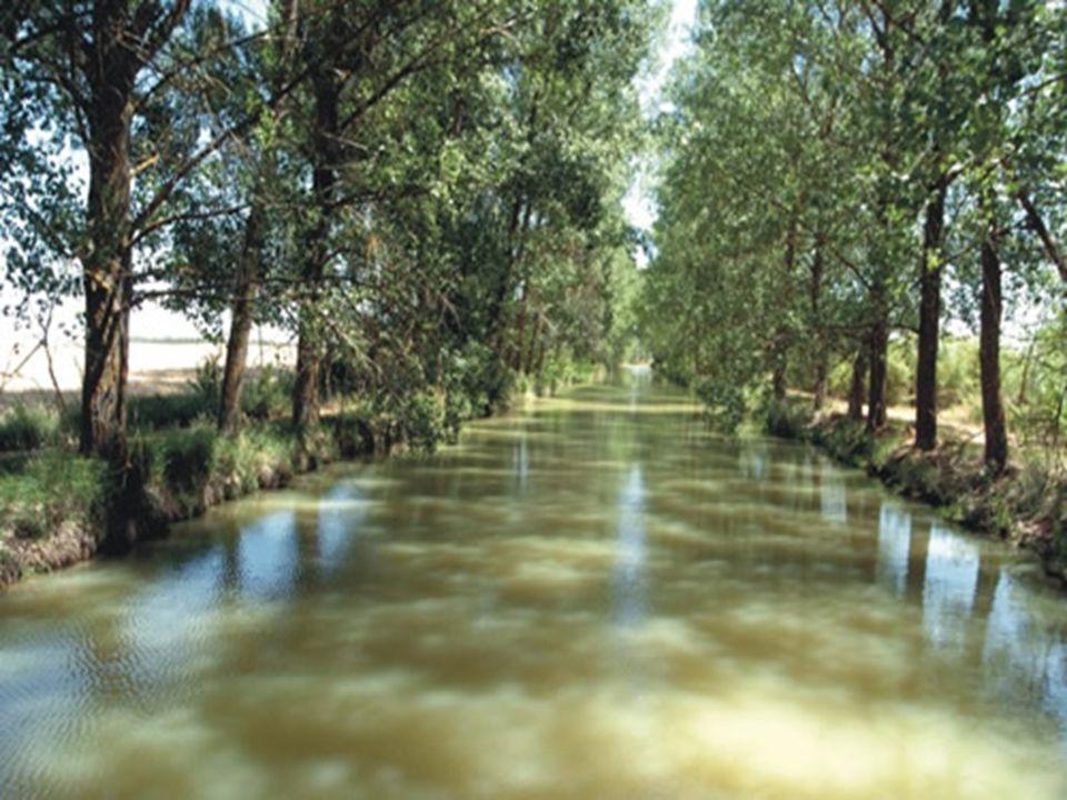 En Castilla, la historia, más que aprenderse, se lleva puesta. Todavía recuerdo cuando ante la esclusa de Calahorra de Ribas, un pastor de la zona, qu