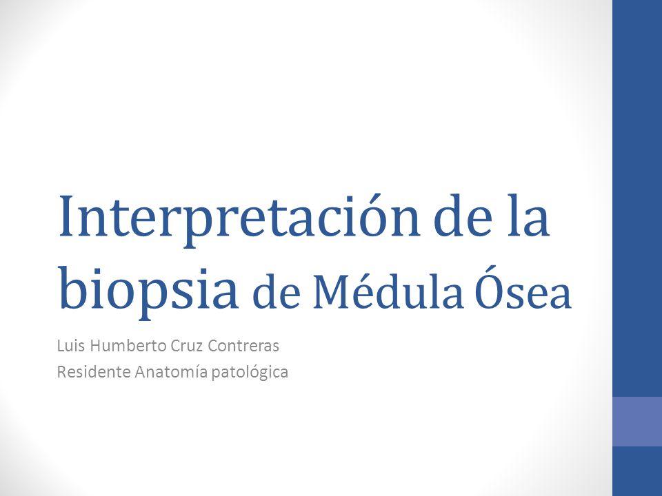 Interpretación de la biopsia de Médula Ósea Luis Humberto Cruz Contreras Residente Anatomía patológica
