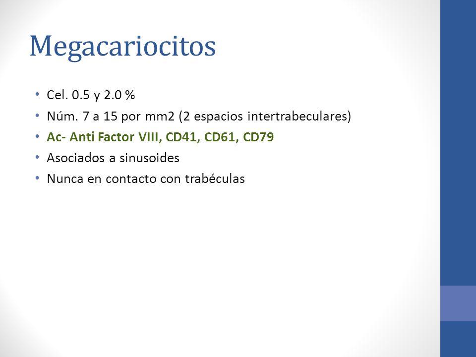 Megacariocitos Cel. 0.5 y 2.0 % Núm. 7 a 15 por mm2 (2 espacios intertrabeculares) Ac- Anti Factor VIII, CD41, CD61, CD79 Asociados a sinusoides Nunca