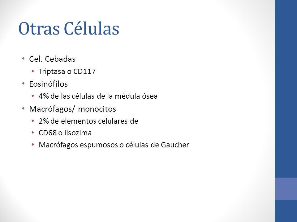 Otras Células Cel. Cebadas Triptasa o CD117 Eosinófilos 4% de las células de la médula ósea Macrófagos/ monocitos 2% de elementos celulares de CD68 o
