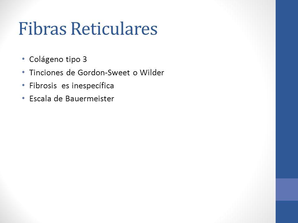 Fibras Reticulares Colágeno tipo 3 Tinciones de Gordon-Sweet o Wilder Fibrosis es inespecífica Escala de Bauermeister