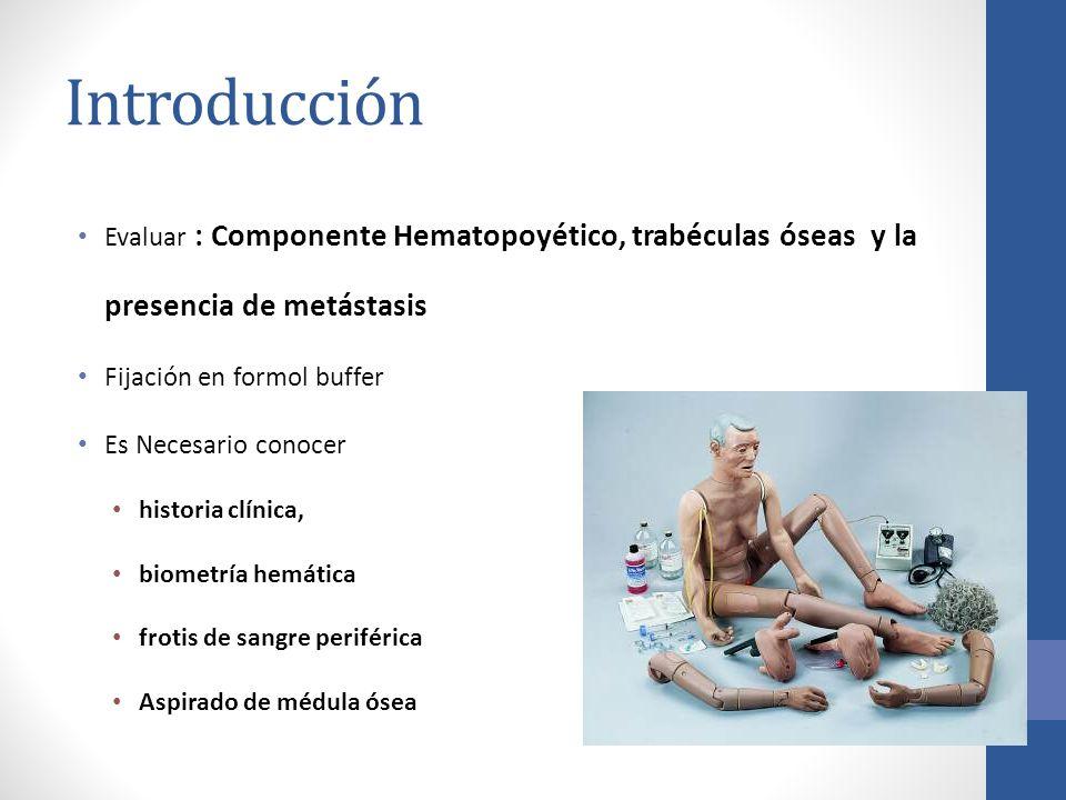 Introducción Evaluar : Componente Hematopoyético, trabéculas óseas y la presencia de metástasis Fijación en formol buffer Es Necesario conocer histori