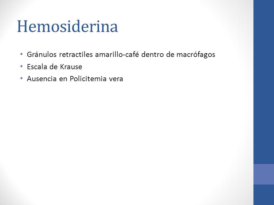 Hemosiderina Gránulos retractiles amarillo-café dentro de macrófagos Escala de Krause Ausencia en Policitemia vera