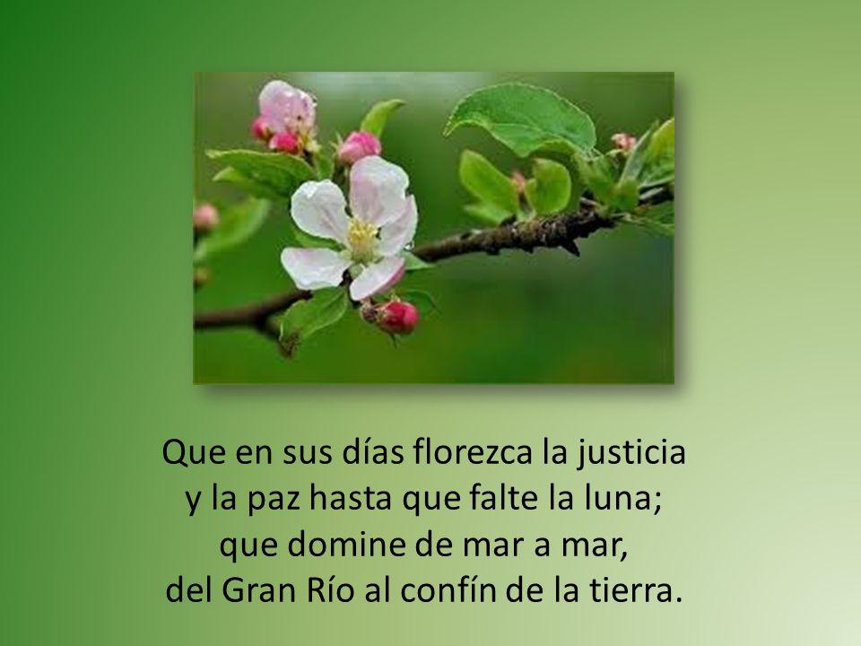 Que en sus días florezca la justicia y la paz hasta que falte la luna; que domine de mar a mar, del Gran Río al confín de la tierra.