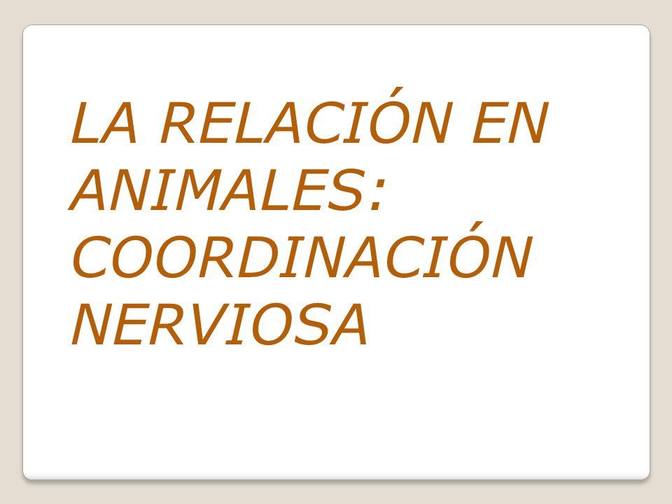 LA RELACIÓN EN ANIMALES: COORDINACIÓN NERVIOSA