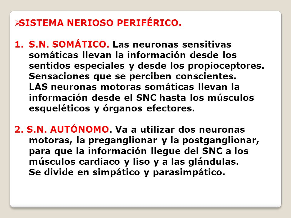 SISTEMA NERIOSO PERIFÉRICO. 1.S.N. SOMÁTICO. Las neuronas sensitivas somáticas llevan la información desde los sentidos especiales y desde los propioc