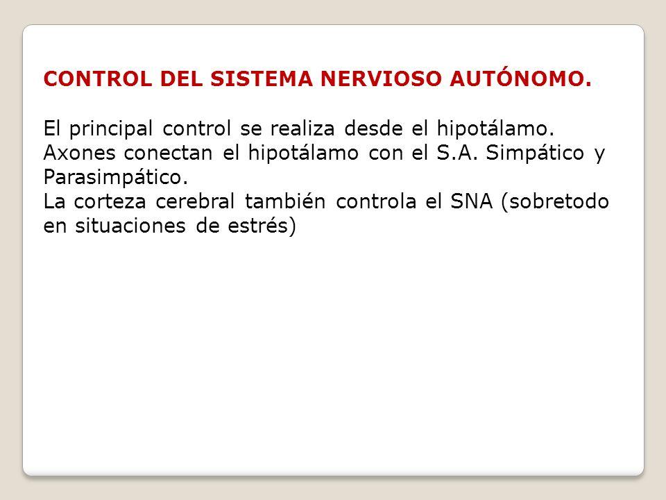 CONTROL DEL SISTEMA NERVIOSO AUTÓNOMO. El principal control se realiza desde el hipotálamo. Axones conectan el hipotálamo con el S.A. Simpático y Para