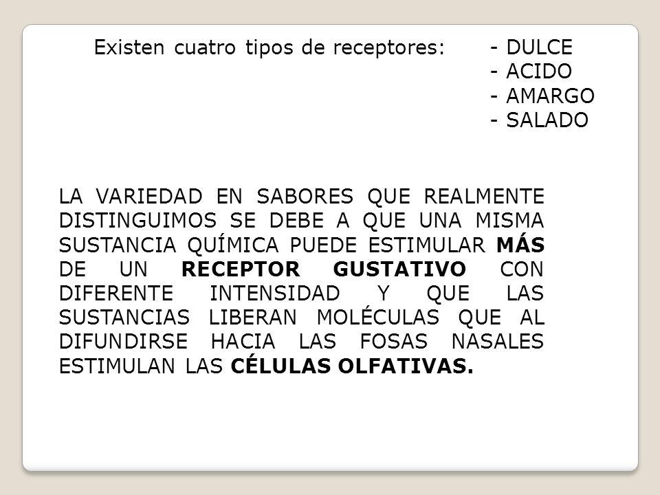 Existen cuatro tipos de receptores:- DULCE - ACIDO - AMARGO - SALADO LA VARIEDAD EN SABORES QUE REALMENTE DISTINGUIMOS SE DEBE A QUE UNA MISMA SUSTANC