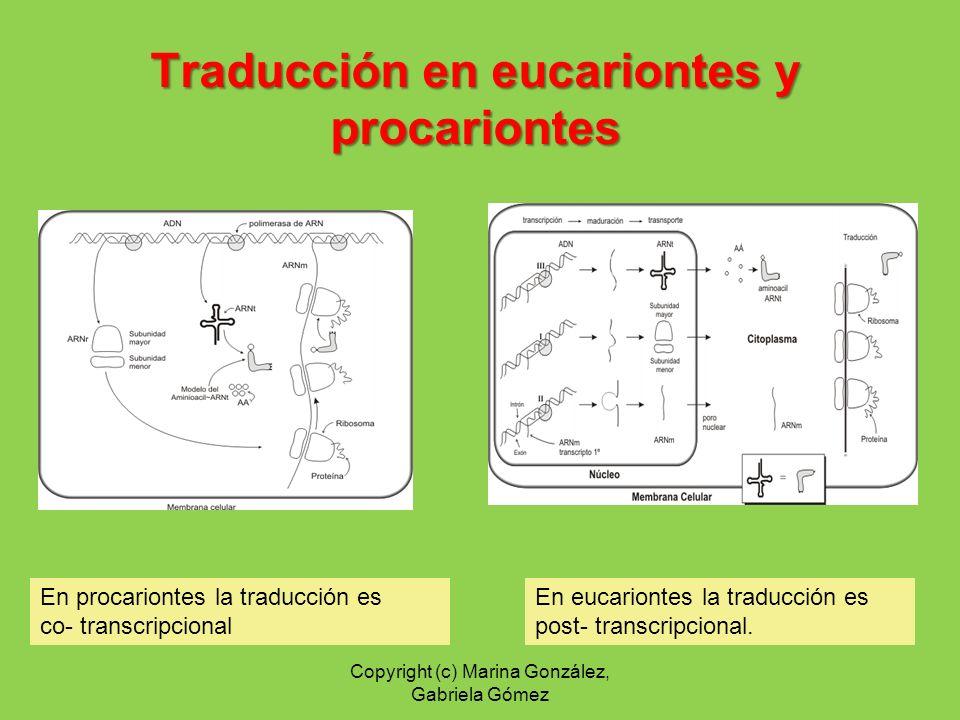 En eucariontes la traducción es post- transcripcional. En procariontes la traducción es co- transcripcional Traducción en eucariontes y procariontes C