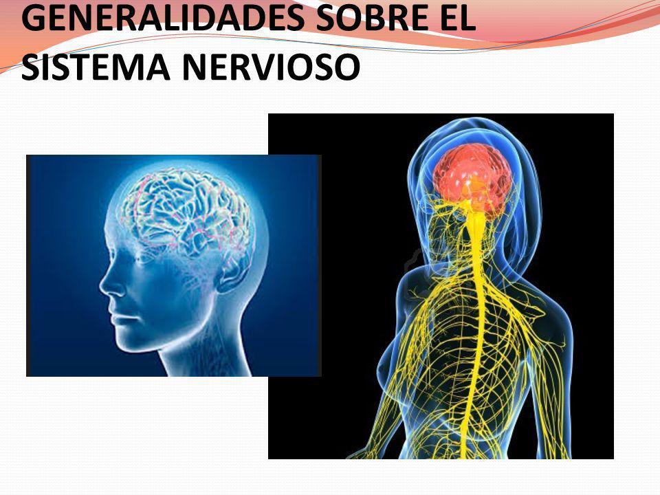 Conceptos de la neurobiología y la neurología: Cerebro: órgano extremadamente dinámico en permanente relación con el ambiente, por un lado, y con los hechos psíquicos o los actos del sujeto, por otro.